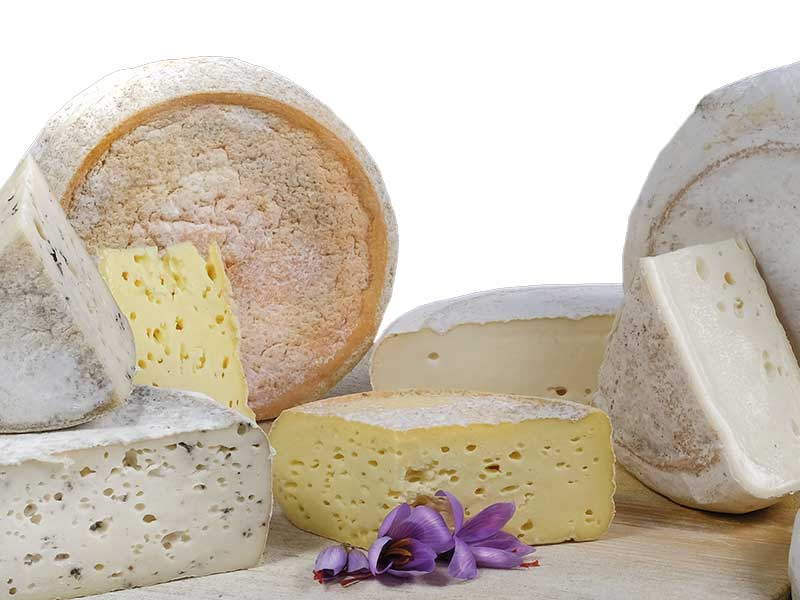 Bloomy Rind Cheese
